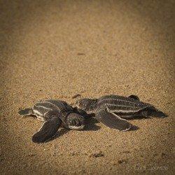 Turtleimages_IG-1-29