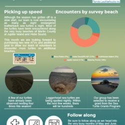 leatherback sea turtle blog infographic