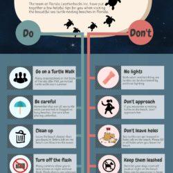 Nesting sea turtle infographic